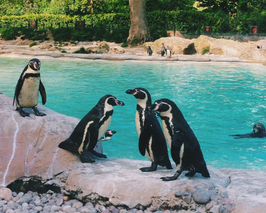 zsl-penguin-huddle