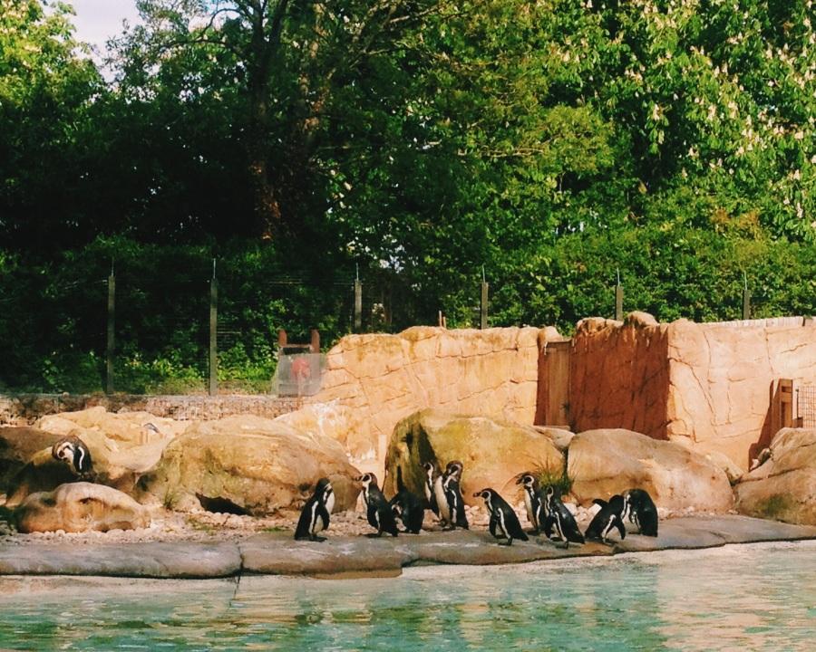 zsl-penguin-beach