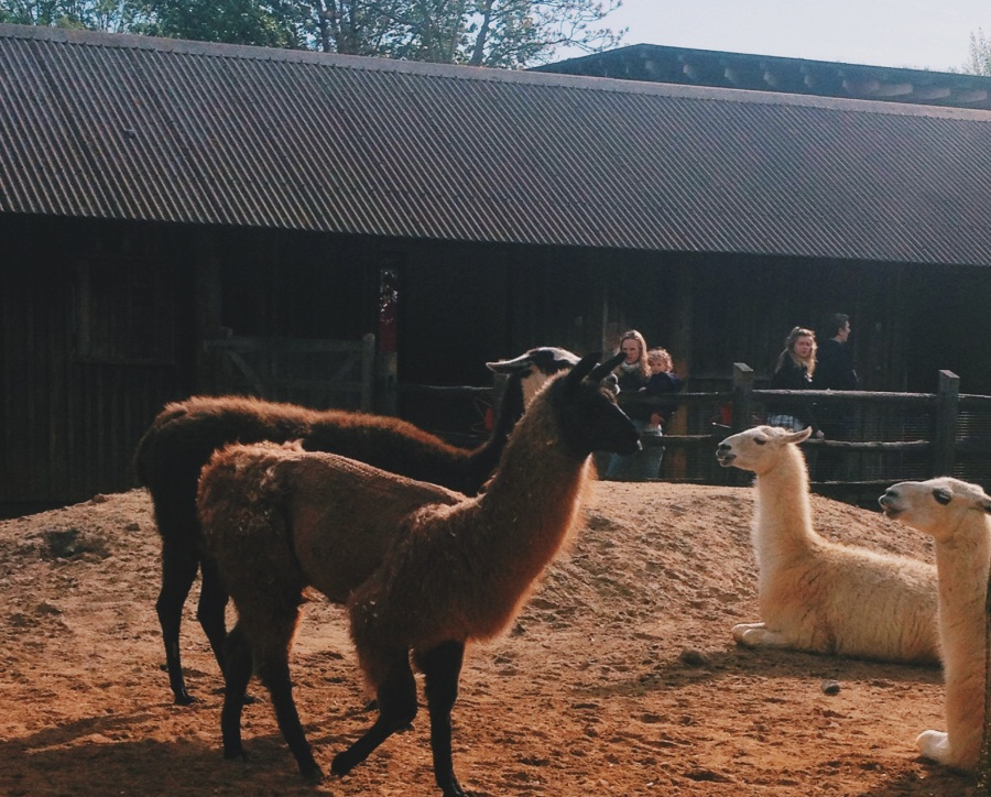 zsl-llamas