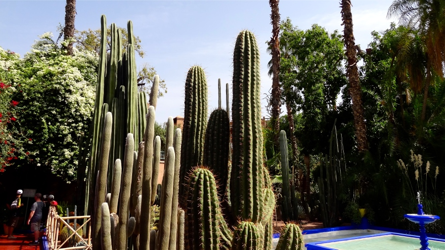majorelle-cacti